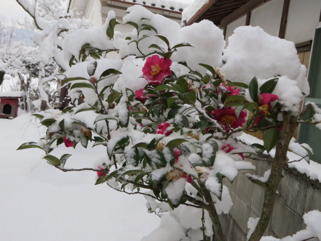 Amazing Pictures of the Snow